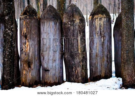 A fence of pointed logs in the forest