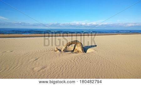 Seacoast. Sand beach. root of the tree can be seen in the sand. sand beach. Sunny day at sea. calm. blue sky.