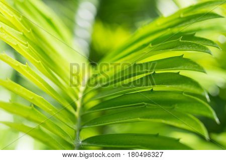 Backlit palm frond on sunlight. Stock photo background with selective focus point and shallow depth of field.