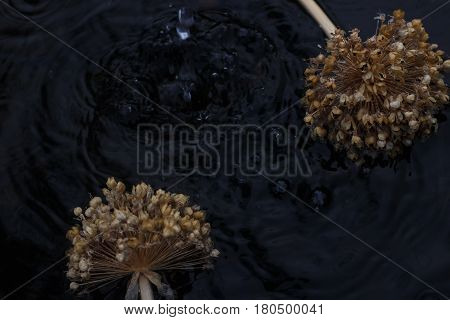 dried flower in the garden near with water. flower in the water