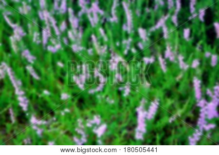 Hard blur blurry heather flower texture background