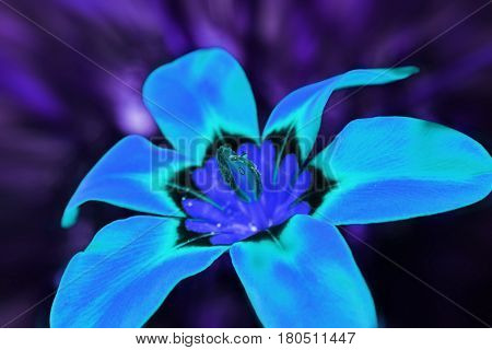 Psychedelic Blue Flower Close Up High Quality