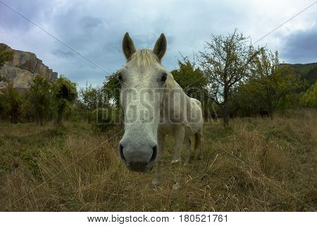 Funny looking muzzle of a white horse with autumn landscape at the background