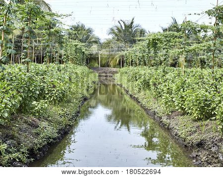 Vegetable Garden Plant Vegetable Basil Bedding, Herb, Nature