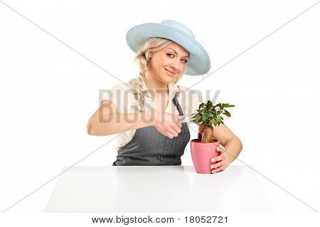 A woman florist cutting a bonsai tree with pruning shears isolated on white background