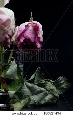 Wilted roses in a glass of water on a black background surrounded by dried leaves