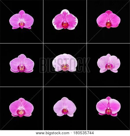 Collage of colorful orchids on the black background