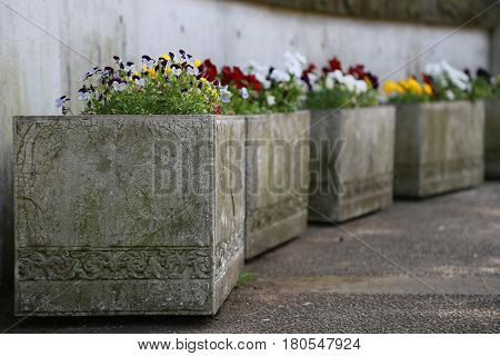 A flowerbed decorating the flowers in the park