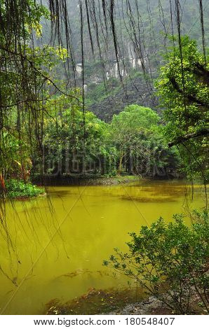 Pond In The Jungle. Ninh Binh, Vietnam
