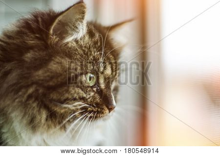 Beautiful cat sitting on windowsill and looking out of a window.