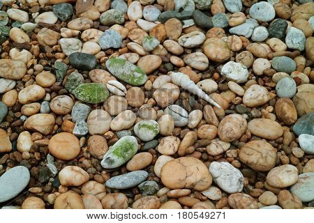 Pebble Stone Ground with Natural Sea Shells for Background