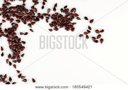 seeds of Japanese quince on white surface