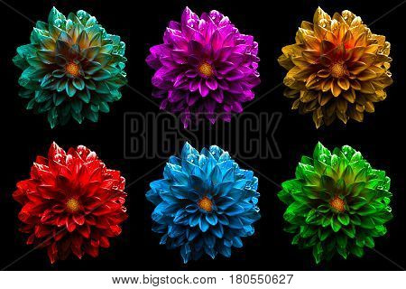 Pack Of Colored Surreal Wet Dahila Flowers Macro Isolated On Black