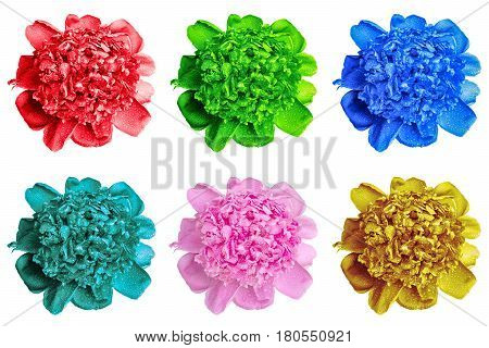 Pack Of Colored Wet Peony Flowers Macro Isolated On White