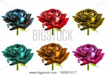 Pack Of Colored Surreal Wet Rose Flowers Macro Isolated On White