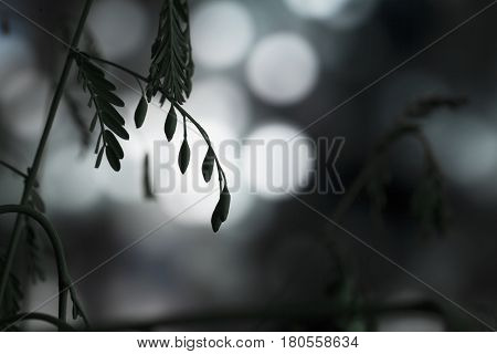 Macro of a legume plant silhouetted against lights at night
