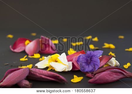 Mixed flowers fallen on a plain dark background