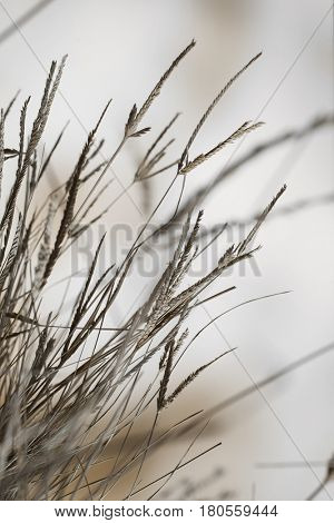 Macro composition of a clump of dry grass