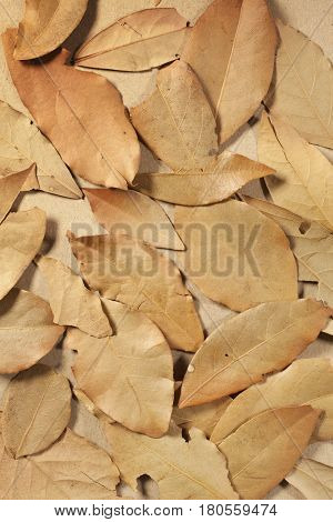 Dried bay leaves on a brown tabletop