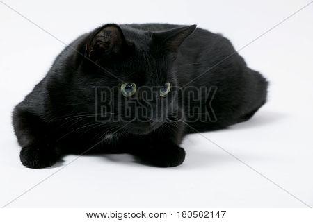 Katze; schwarz black; grüne Augen; weißer Hintergrund; high key; cat; tabby; green eyes; white Background