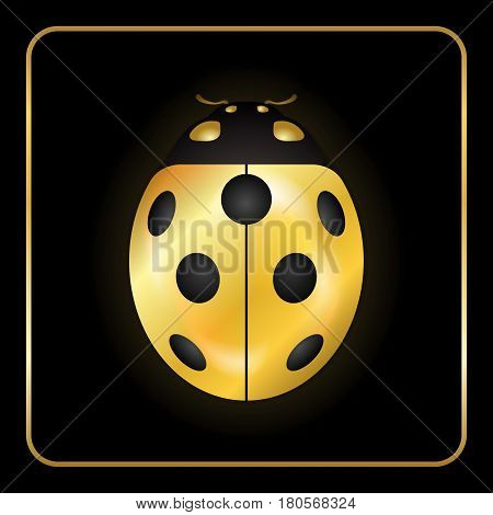 Ladybug gold insect small icon. Golden metal lady bug animal sign isolated on black background. 3d volume bright design. Cute shiny jewelry ladybird. Lady bird closeup beetle. Vector illustration