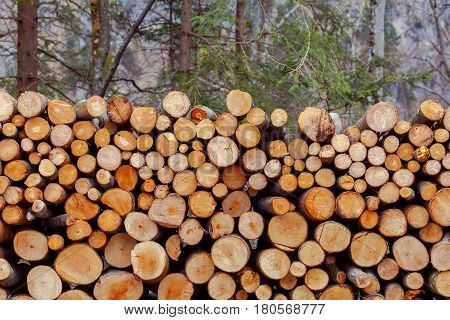 The trunks of felled trees were laid before loading on a sawmill.