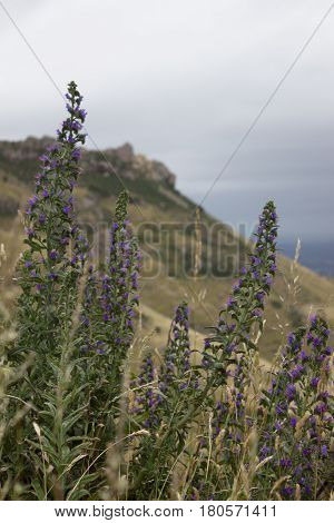Wild Plants In Mountains