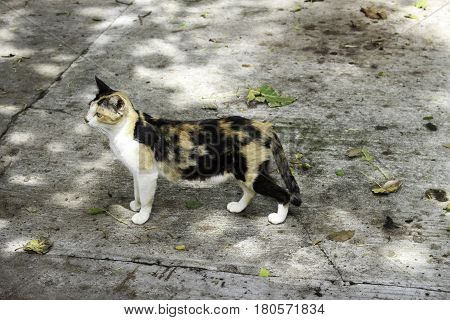 Outdoor cats are active both day and night although they tend to be slightly more active at night. The timing of cats' activity is quite flexible and varied which means house cats may be more active in the morning and evening as a response to greater huma