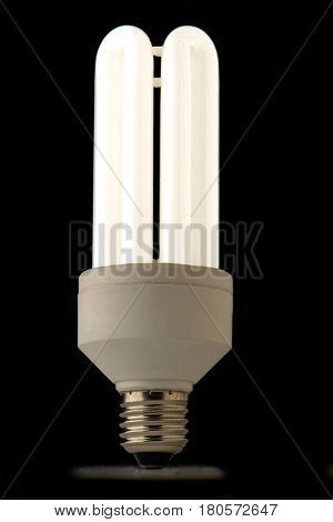 The bulb isolated on a black background