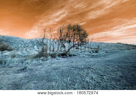 Surreal alien landscape with orange sky and blue grass. An orange sunset with light color manipulation provided this transcendental dreamlike image.