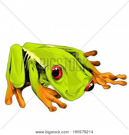 little green frog with orange feet and red eyes sitting sketch vector graphics color picture