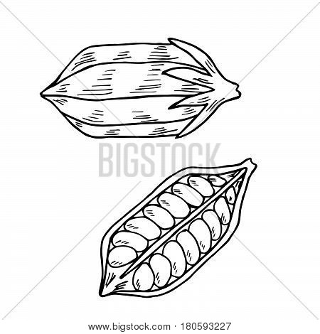 Sesame seed natural organic butter ingredient. Treatment care food ingredient. Ink hand drawn sketch illustration isolated on white background.