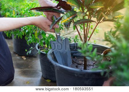 Plant A Tree And Loosen The Soil