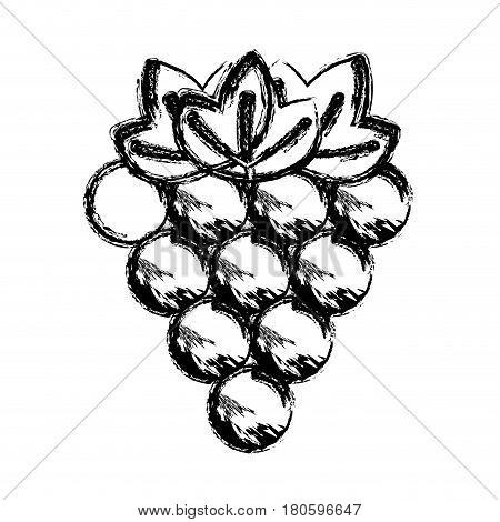 contour grapes fruit icon image, vector illustration design stock