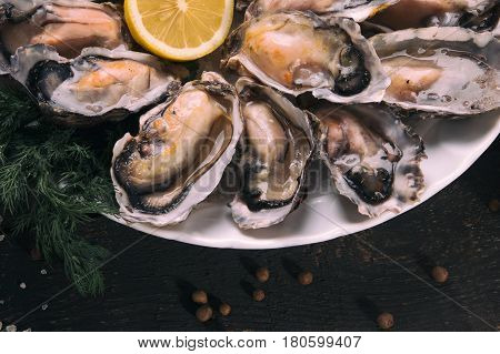 Oysters with lemon close-up. Fresh oysters. Oysters on the table