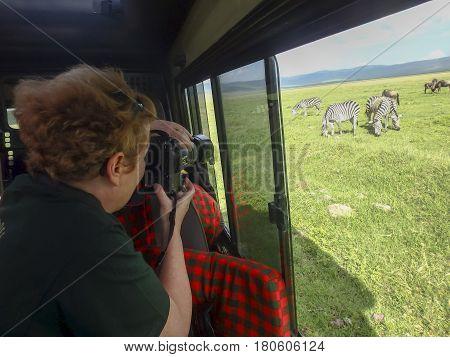 Photographer on safari shooting zebras and wildebeast from vehicle window.