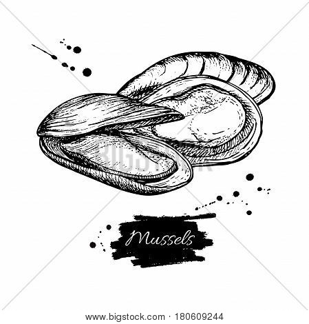 Mussel hand drawn vector illustration. Engraved style vintage seafood. Oyster sketch. Great for Fish and sea food restaurant menu, flyer, card, business promote.
