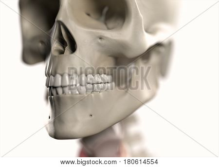 Anatomy body human. Skull, head and jaw. Skeletal system. 3d illustration.