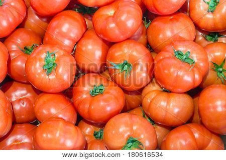 Background of red freshly picked tomatoes in Dutch plant nursery