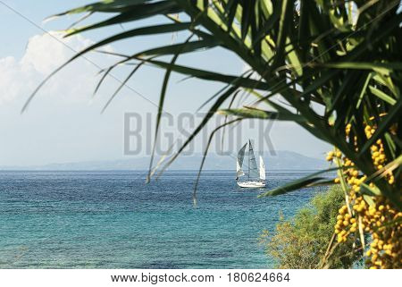 sailboat on the summer sea and blue sky against the backdrop of palm limb