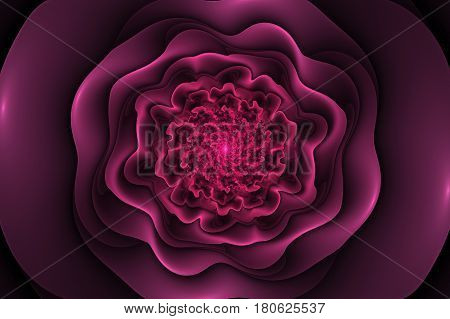 Black Background With Pink Rose In The Center. Spiral Flower Texture, Fractal Pattern. Marsala Flowe