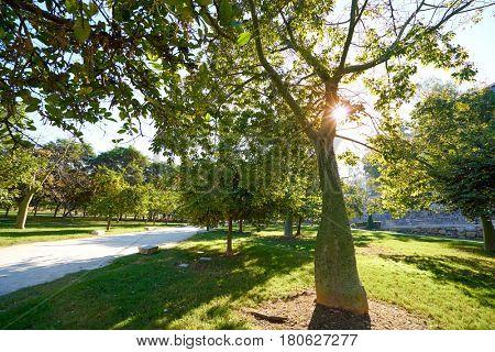 Valencia ceiba tree at Turia park gardens view in Spain