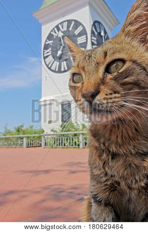 Cat in front of Novi Sad historical tower - Petrovaradin tower