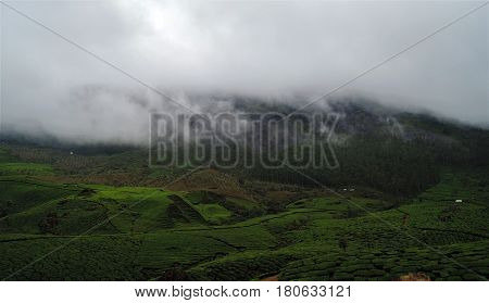 Morning over a Munnar tea field with clouds settling after a light rain.