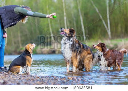 Young Woman Playing With Three Dogs At A River