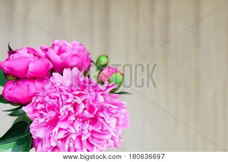 close-up pink peony petals bud flower on wooden background greeting card concept