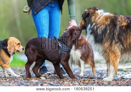 Woman With Four Dogs At A River