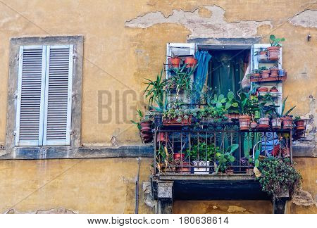 Little oasis on the balcony of a rundown building in Siena, Italy
