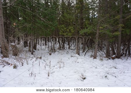 Fresh snow blankets the forest floor in the Naas Raunecker Nature Preserve in Harbor Springs, Michigan during November.