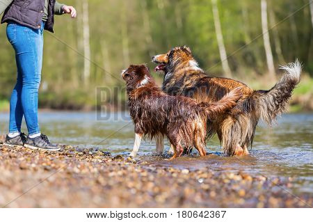 Young Woman With Two Dogs At The River